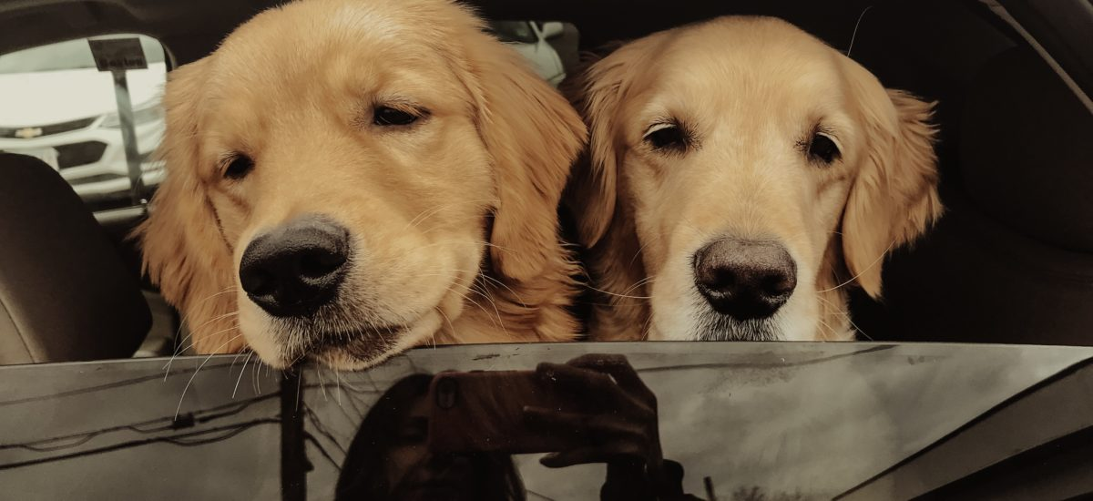 Road trip with your dog? Furry friend essentials